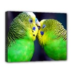 Kiss And Love Lovebird Canvas 14  x 11  (Stretched)
