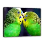 Kiss And Love Lovebird Canvas 16  x 12  (Stretched)