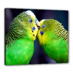 Kiss And Love Lovebird Canvas 24  x 20  (Stretched)