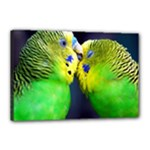 Kiss And Love Lovebird Canvas 18  x 12  (Stretched)