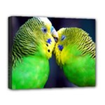 Kiss And Love Lovebird Deluxe Canvas 20  x 16  (Stretched)