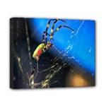 Joro Spider Canvas 10  x 8  (Stretched)