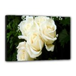 White Rose Canvas 18  x 12  (Stretched)