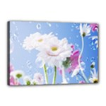 White Gerbera Flower Refresh From Rain Canvas 18  x 12  (Stretched)