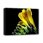 Yellow Freesia Flower Deluxe Canvas 16  x 12  (Stretched)