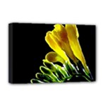 Yellow Freesia Flower Deluxe Canvas 18  x 12  (Stretched)