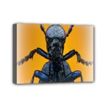 Animal Oil Beetle Mini Canvas 7  x 5  (Stretched)