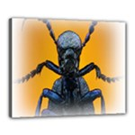 Animal Oil Beetle Canvas 20  x 16  (Stretched)