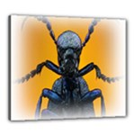 Animal Oil Beetle Canvas 24  x 20  (Stretched)