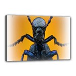 Animal Oil Beetle Canvas 18  x 12  (Stretched)