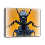 Animal Oil Beetle Deluxe Canvas 14  x 11  (Stretched)
