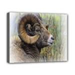 Bighorn Sheep Canvas 10  x 8  (Stretched)