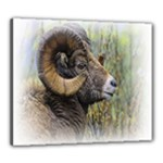 Bighorn Sheep Canvas 24  x 20  (Stretched)