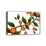 Flower Branch Nature Leaves Plant Mini Canvas 6  x 4