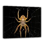 Insect Macro Spider Colombia Canvas 20  x 16
