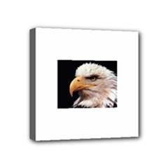 www_pics_am-birds133 Mini Canvas 4  x 4  (Stretched)
