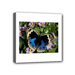 butterfly_4 Mini Canvas 4  x 4  (Stretched)