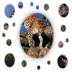 dimention kingdom animal king tree climber leopard