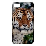 Tiger In Winter BlackBerry 10 Dev Alpha A (Z10) Hardshell Case