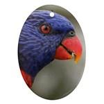 Rainbow Lorikeet Ornament (Oval)