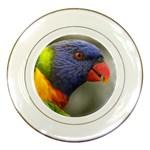 Rainbow Lorikeet Porcelain Plate