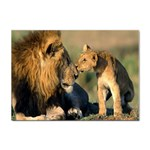 Kissing Mom  Lions Sticker A4 (10 pack)