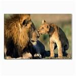 Kissing Mom  Lions Postcard 4 x 6  (Pkg of 10)