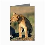 Kissing Mom  Lions Mini Greeting Card
