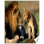 Kissing Mom  Lions Canvas 11  x 14