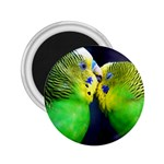 Kiss And Love Lovebird 2.25  Magnet