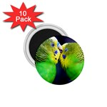 Kiss And Love Lovebird 1.75  Magnet (10 pack)