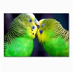 Kiss And Love Lovebird Postcards 5  x 7  (Pkg of 10)