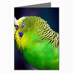 Kiss And Love Lovebird Greeting Card