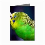 Kiss And Love Lovebird Mini Greeting Cards (Pkg of 8)