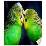 Kiss And Love Lovebird Canvas 8  x 10