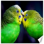 Kiss And Love Lovebird Canvas 12  x 12