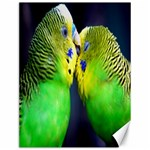 Kiss And Love Lovebird Canvas 12  x 16