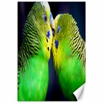 Kiss And Love Lovebird Canvas 12  x 18