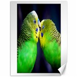 Kiss And Love Lovebird Canvas 36  x 48