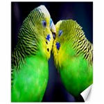 Kiss And Love Lovebird Canvas 11  x 14