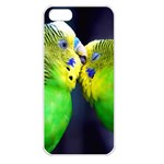 Kiss And Love Lovebird Apple iPhone 5 Seamless Case (White)