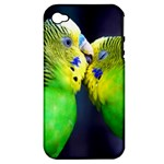 Kiss And Love Lovebird Apple iPhone 4/4S Hardshell Case (PC+Silicone)