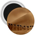 Marching To Success Camel In Desert 3  Magnet