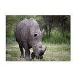 Wild Animal Rhino Sticker A4 (10 pack)