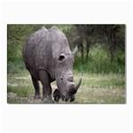 Wild Animal Rhino Postcard 4  x 6
