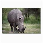Wild Animal Rhino Postcard 4 x 6  (Pkg of 10)