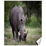 Wild Animal Rhino Canvas 8  x 10