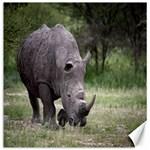 Wild Animal Rhino Canvas 20  x 20