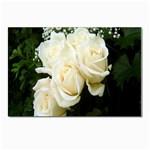 White Rose Postcards 5  x 7  (Pkg of 10)
