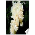 White Rose Canvas 12  x 18